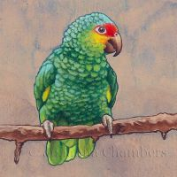 Parrot Miniature by johannachambers