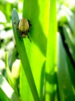 Spider on a Blade of Grass by James-Fong