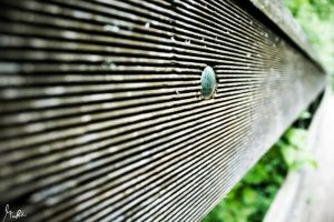wooden.Balustrade by Ave117