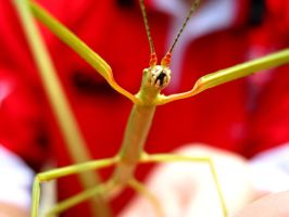 Stick Insect by Annas-Day-Dreams