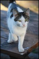 Campground Kitty... by LadyAliceofOz
