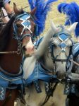 Parading in blue by Lys333