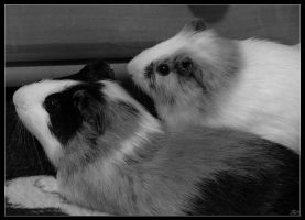 TwoGuinaepigs in B and W by SkoRuPa-9