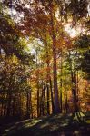 Fall-Light by pagit