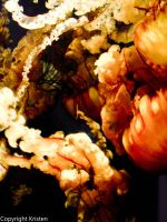 Sea Nettles by Know-The-Ropes