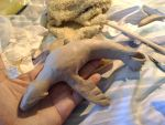 Sealion Relief Sculpt by ArtBleed