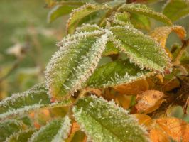 Frost Outdoor Stock 085 by ShawnaMac