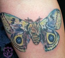 Moth Tattoo done by Sean Ambrose by seanspoison