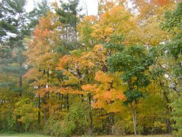 Canadian Fall Colours 42 by Aswang301