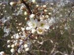 More White Flowers by AndyBuck