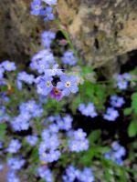 Blue Flowers by crescent95