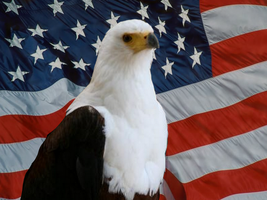 Eagle American Flag by Giluc