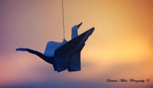 Spreads its wings and flies. by DumitruMihai