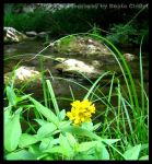 Little yellow flower by Clelia91