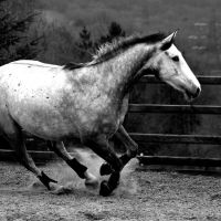 grey horse in black and white by imtl