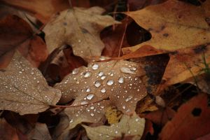 Morning Leaves by KristinaLynnPhotos