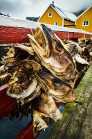 Fish Heads of Nusfjord by cwaddell