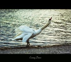 Evening dance. by Phototubby