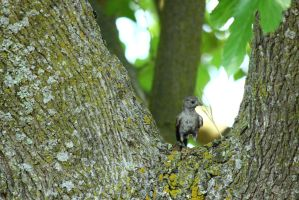 Bird on a Tree by Cats-go-moo-always