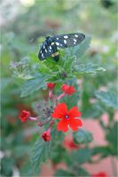 Insect on red flower by Luks85