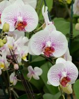 Orchids II by FeralWhippet