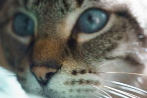 Cat 1411.01 by Dilong-paradoxus