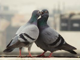 In Love by Saurabh682