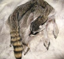Coon Pelt reference 1 by lamelobo