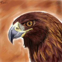 Golden Eagle Oekaki by Tacimur