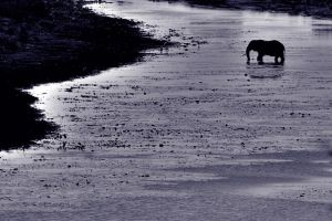 The crossing by mahleu