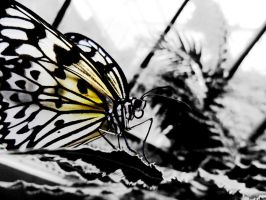 Butterfly edit by Andre3Tears