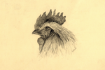 Rooster by Earldense