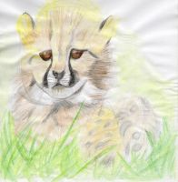 cheetah (after) by Lidia6277