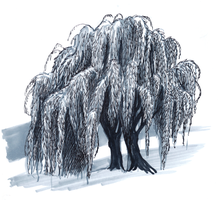 Willow tree by Ilovetodraw