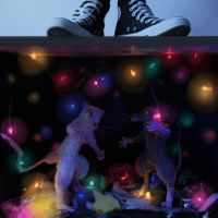 Party under the floor boards by FartSmasher