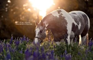 Tommy Amongst The Flowers by Hestefotograf