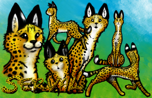 Serval- Collage by momodory09