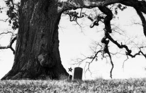 Under the Old Oak Tree by PicklesAddie