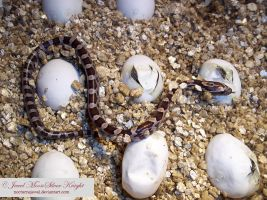 SLITHERS AND FLICKERS by NocturneJewel