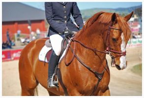 copperhead by EquusAustralia