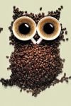 Owl of coffee by fredjazz