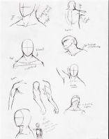 Neck and shoulder study by DelightsJD