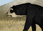 Short faced bear by b0w-w0w