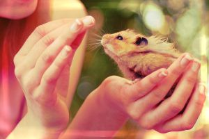 Hamster IV by whensummerends
