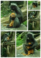Monkey with baby stock pack by BirdsistersStock