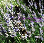 Nature's Pollinating Experts by Miss-Whoa-Back-Off