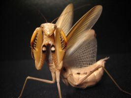 Tan European Mantis 2 by Joe680
