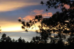 Sunset through Ponderosa Pines by OrioNebula