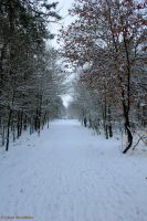 Winter wonderland by jochniew