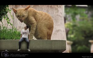 Big Cat, Small Me. by SLRrazor